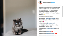 Bild einer blinden Katze auf Instagram