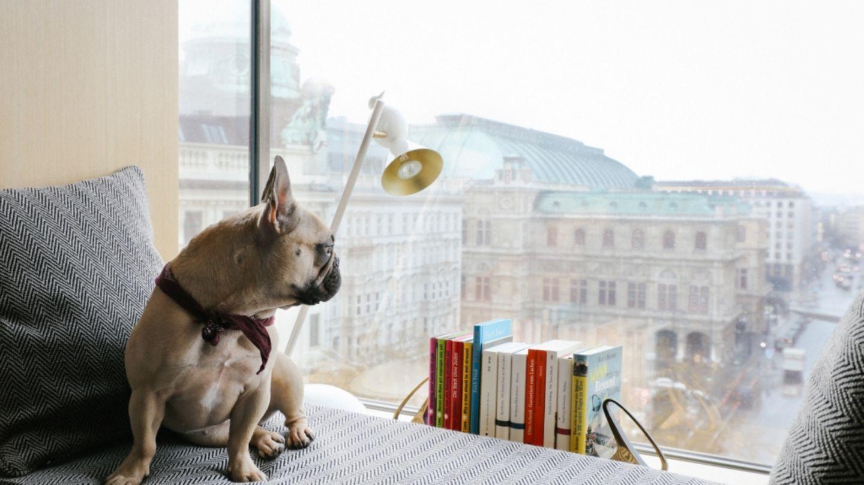 """Wien - The Guest House Vienna: Ein Citytrip mit Hund ist ja nicht immer ganz einfach, vor allem für das Tier. Umso wichtiger ist, dass Hund und Herrchen in einem Hotel absteigen, in dem der Wuffer nicht nur willkommen ist, sondern das Personal auch gute Tipps für Gassirunden parat hat. Im """"Guest House""""in der Wiener Innenstadt ist beides absolut der Fall. Das kleine, stylische Zuhause auf Zeit liegt strategisch günstig zwischen Oper und Stephansplatz neben der Albertina, das Interieur ist eine tolle Mischung aus Design und Gemütlichkeit. Eingerichtet hat es das Team um Sir Terence Conran. Hundebett, Napf und Leckerlis gibt es natürlich auch. Individuelles Stadthotel mit besonderem Charme. Ab ca. 135 Euro pro Person im DZ, für Hunde wird kein Aufschlag berechnet. Infos: www.theguesthouse.at"""