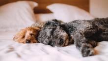 Entspannung - wichtig für Hund und Halter