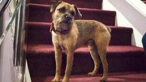 Die DOGS-Redaktion war zu Besuch bei einem ganz besonderen Hund (Symbolbild)