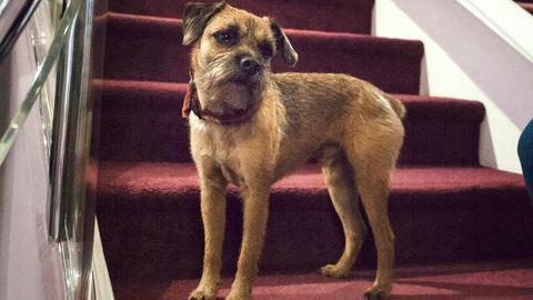 Die DOGS-Redaktion war zu Besuch bei einem ganz besonderen Hund