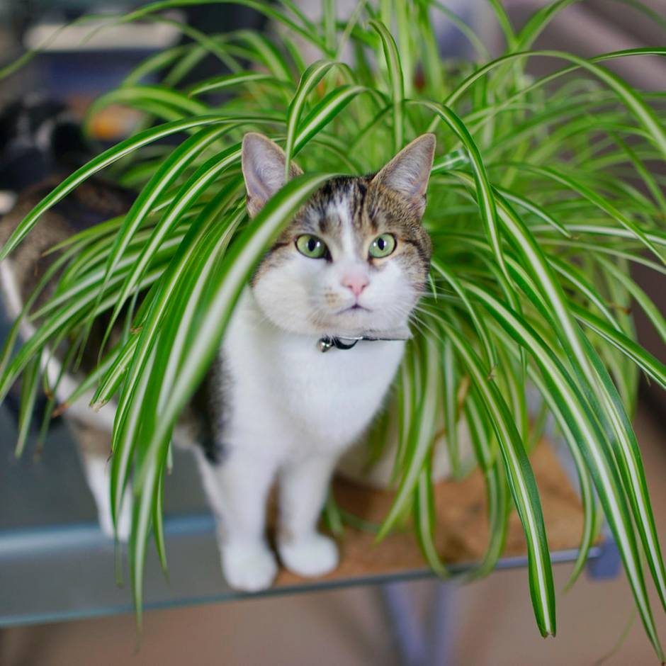 Revival der Zimmerpflanzen: Zehn Grünpflanzen, die selbst du nicht tot kriegst