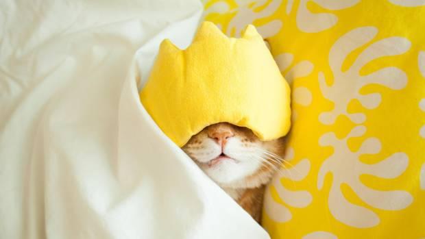 Schlafmangel: Kann man Schlaf am Wochenende nachholen?