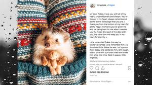 Instagram-Igel Mr. Pokee ist gestorben