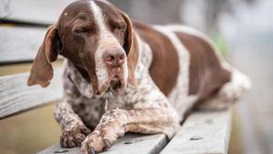 Hund - Drogen - THC - Joint