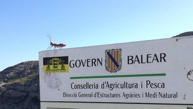 Eine Drahtameise sitzt auf einem spanischen Schild
