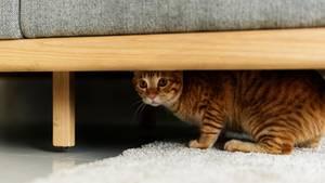 Katze versteckt sich unter einem Sofa