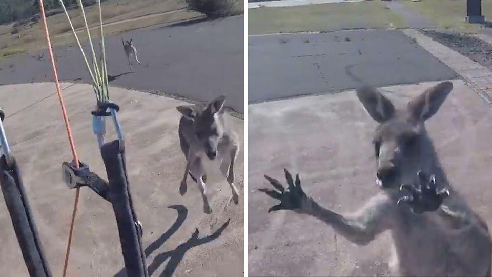 Australien: Paraglider landet und kriegt von Känguru aufs Maul