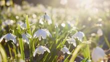 Der Frühling hält Einzug