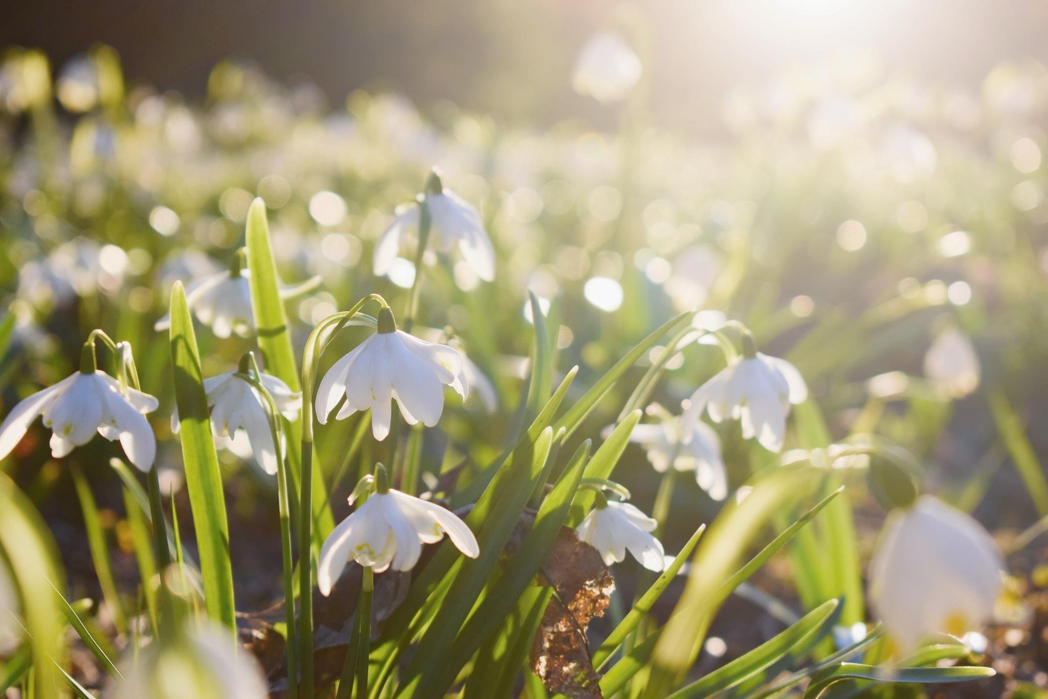 Wetter in Deutschland: Es wird noch einmal kalt - aber dann startet der Frühling