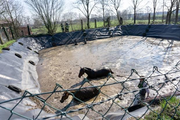 nachrichten aus deutschland pferde in güllegrube