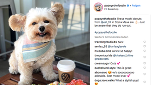Der kleine Streunerhund wurde dank seiner Retterin zum Instagram-Star