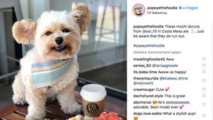 Der kleine Streunerhund wurde dank seiner Retterin zum Instagram-Star