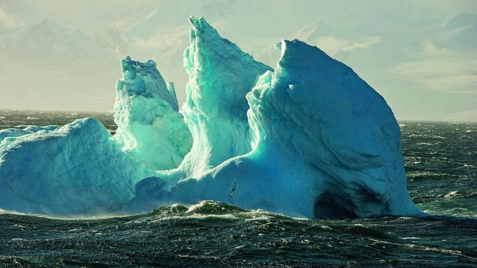 Vor einem Eisberg in der Gerlache-Straße südlich von Feuerland vor der Antarktischen Halbinsel fliegt ein Kapsturmvogel auf der Jagd nach Krill über den Wellen.