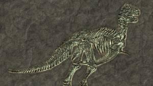 Ein versteinertes Tyrannosaurus-Rex-Skelett