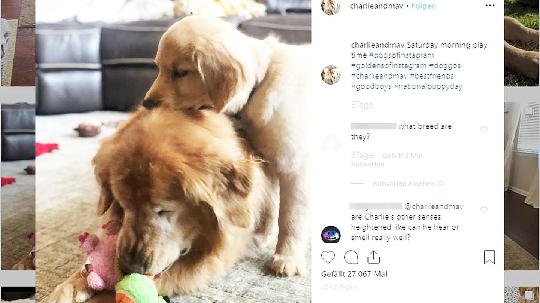 Grüner Star und tierische Freundschaft: Charlie und Maverick