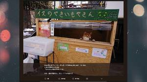 Shiba Inu als Shopkeeper
