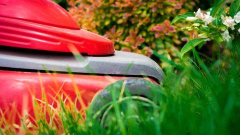 Hohes Gras mögen die Akkugeräte gar nicht (Symbolfoto)