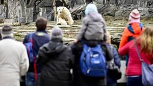 Besucher in einem Zoo sehen sich Eisbären an