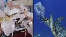 Verschmutzung des Meeres führt zu Schildkrötensterben