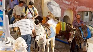Esel mit schweren Reitern in Fira