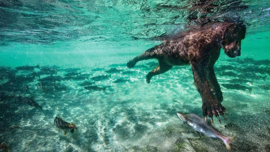 """Netflix-Doku""""Unser Planet"""": Gespräch mit Tierfilmer David Attenborough"""