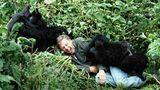 Spielerisch. Attenboroughs Lieblingsfoto mit den Berggorillas in Ruanda aus dem Jahr 1979.