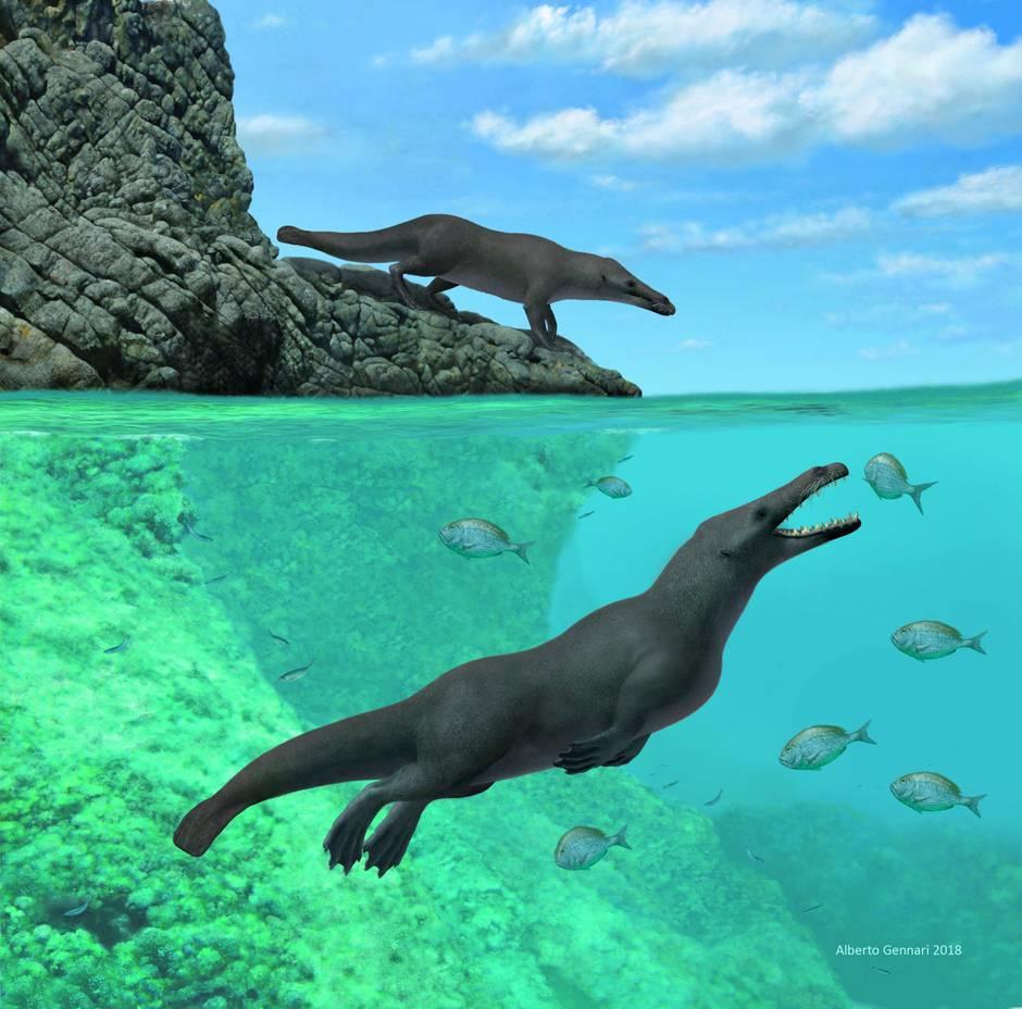 Eine Rekonstruktion zeigt, wie der Ur-Wal ausgesehen haben könnte