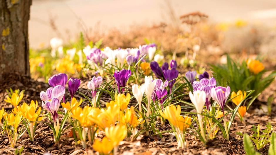 Frühling in Deutschland