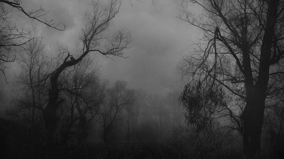 Reddit: Dunkler Wald