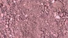 Vergrabene Spinne im Sand