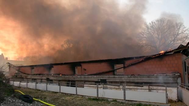 Schweinestall in Warendorf abgebrannt