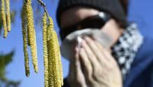 Heuschnupfen - so bekommen Sie die lästigen Pollen in den Griff