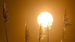 Tageslicht