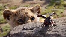 Löwe Simba und ein Käfer