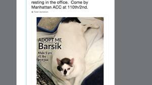 Katze Barsik