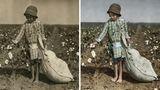 Ein Mädchen zupft Baumwolle von einer Pflanze