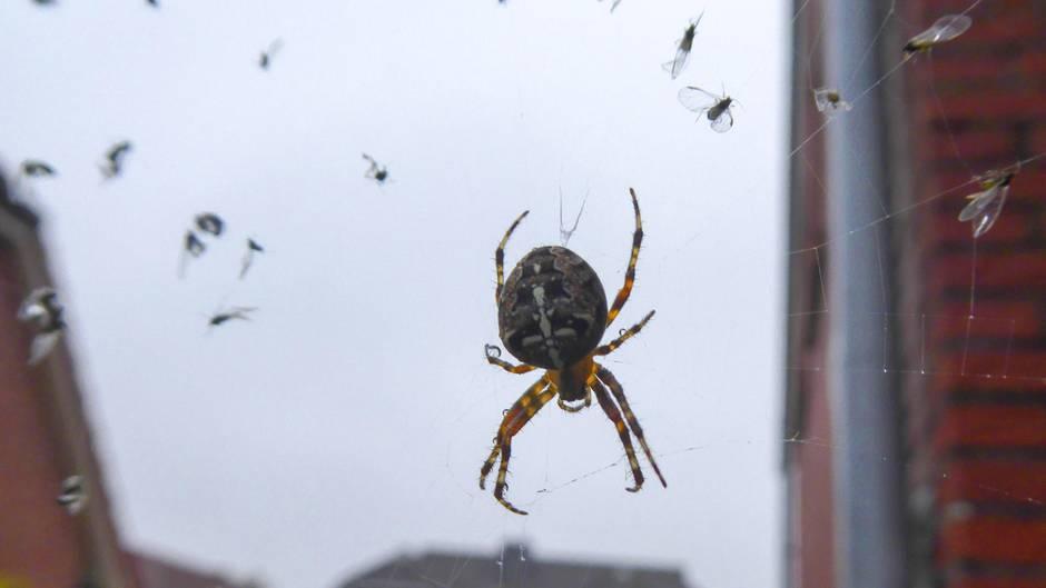 Was gegen spinnen tun