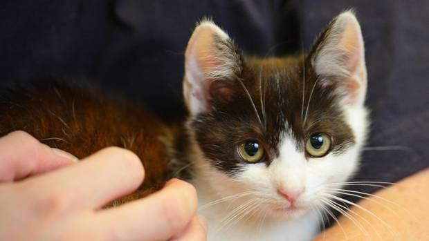 Ein Kätzchen (Symbolbild). Auch die Katze der Burrs war mit ihren sechs Monaten noch ein recht junges Tier und entsprechend neugierig, als ihr ein Sprung in die Waschmaschine beinahe zum Verhängnis wurde.