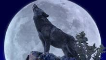 Der 4000 Jahre alte Hund soll Ähnlichkeiten zum heutigen europäischen Wolf aufweisen