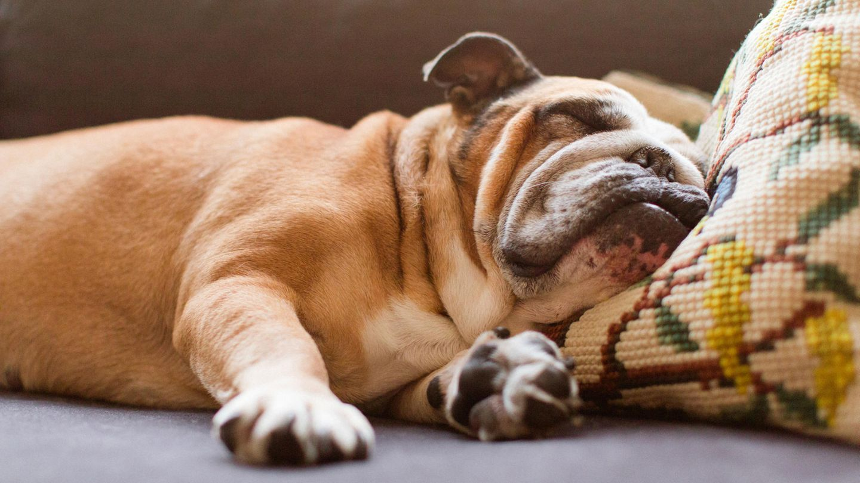 Am Sonntag lässt es sich wunderbar auf der Couch entspannen