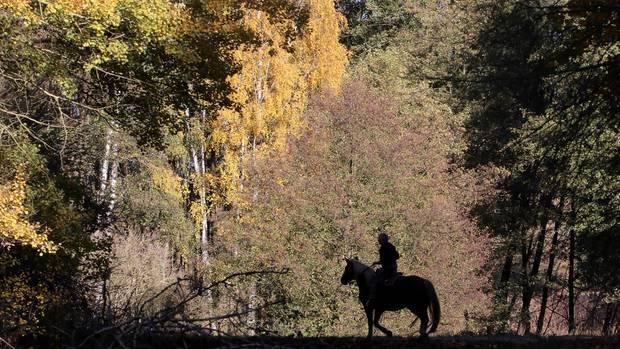 Die Schriftstellerin Juli Zeh liebtdie alten Mischwaldwälderrund um den Groß Behnitzer See westlich von Berlin