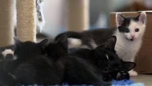 Katzenbabys! Im Tierheim in Berlin-Hohenschönhausen ist gerade ein Wurf kleiner Kätzchen zur Welt gekommen.