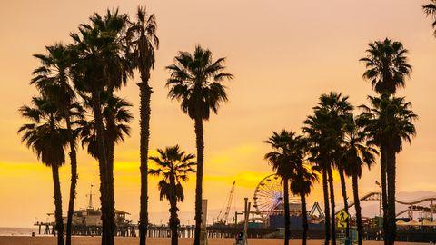Palmen am Strand von Santa Monica