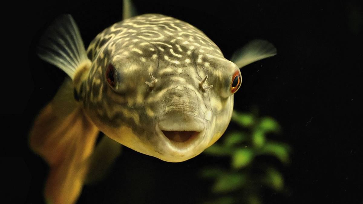 Australische Dating-Seiten FischDating-Agentur cyrano ep 15