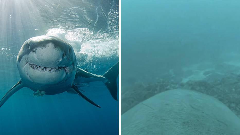 Modernste Kameratechnik: Das gab es noch nie: Hier sehen Sie den Ozean aus der Perspektive eines Weißen Hais