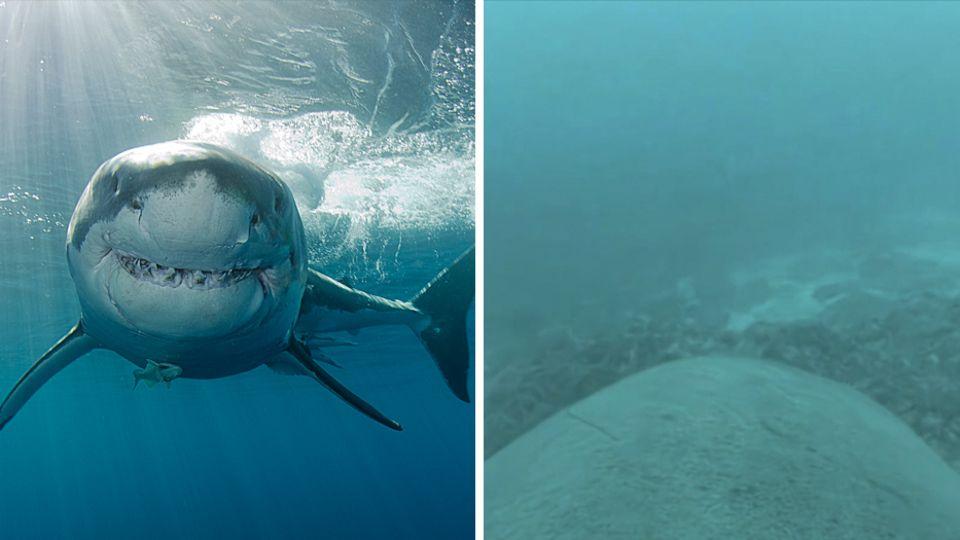 Vermisster Schotte: Hand im Körper eines Hais gefunden – am Finger steckte ein Ehering