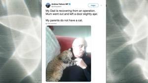 Twitter-Post von MP Andrew Falloon zeigt seinen Vater wie er schlafend mit einer fremden Katze kuschelt