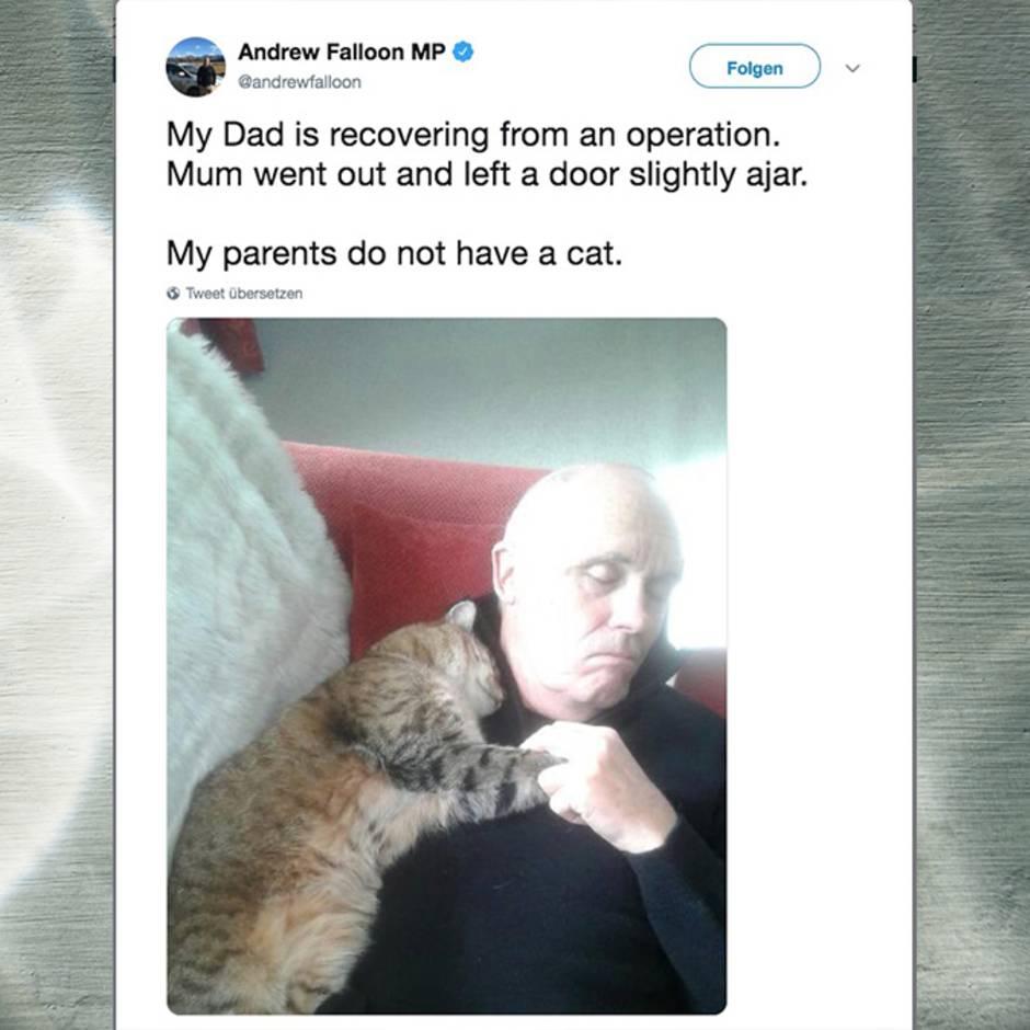 Willkommener Eindringling: Flauschiger Krankenbesuch – dabei hat dieser Mann eigentlich gar keine Katze