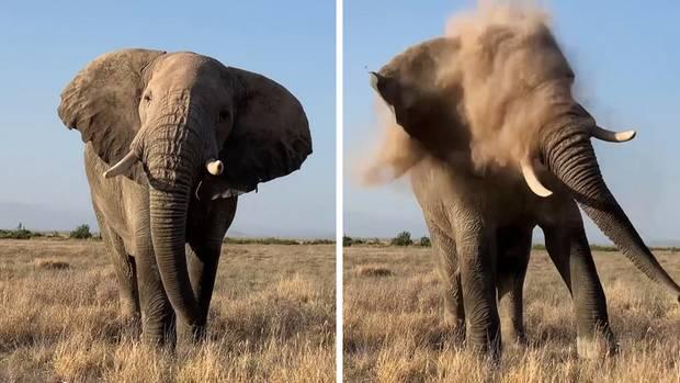 Elefant niest